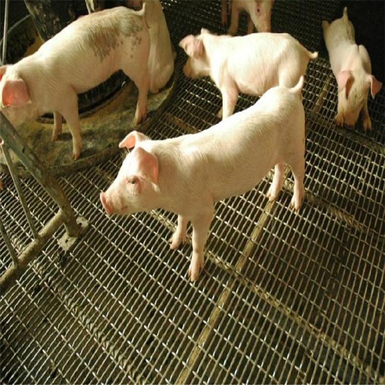猪突然死亡主要病因分析全部都在这!