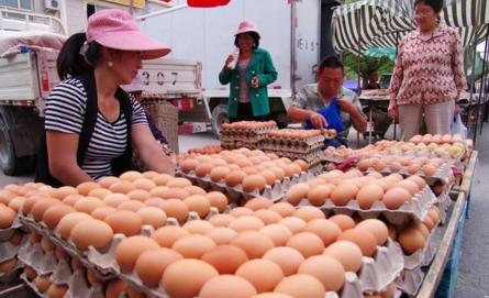 10月20日全国各地鸡蛋参考价格