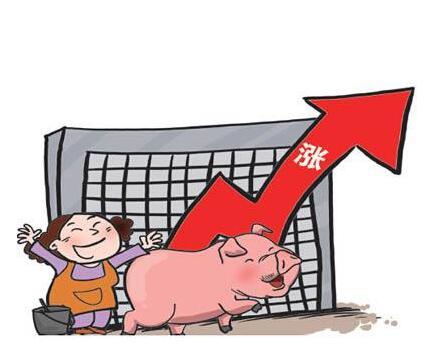 10月20日全国猪价参考,上涨见顶了吗?