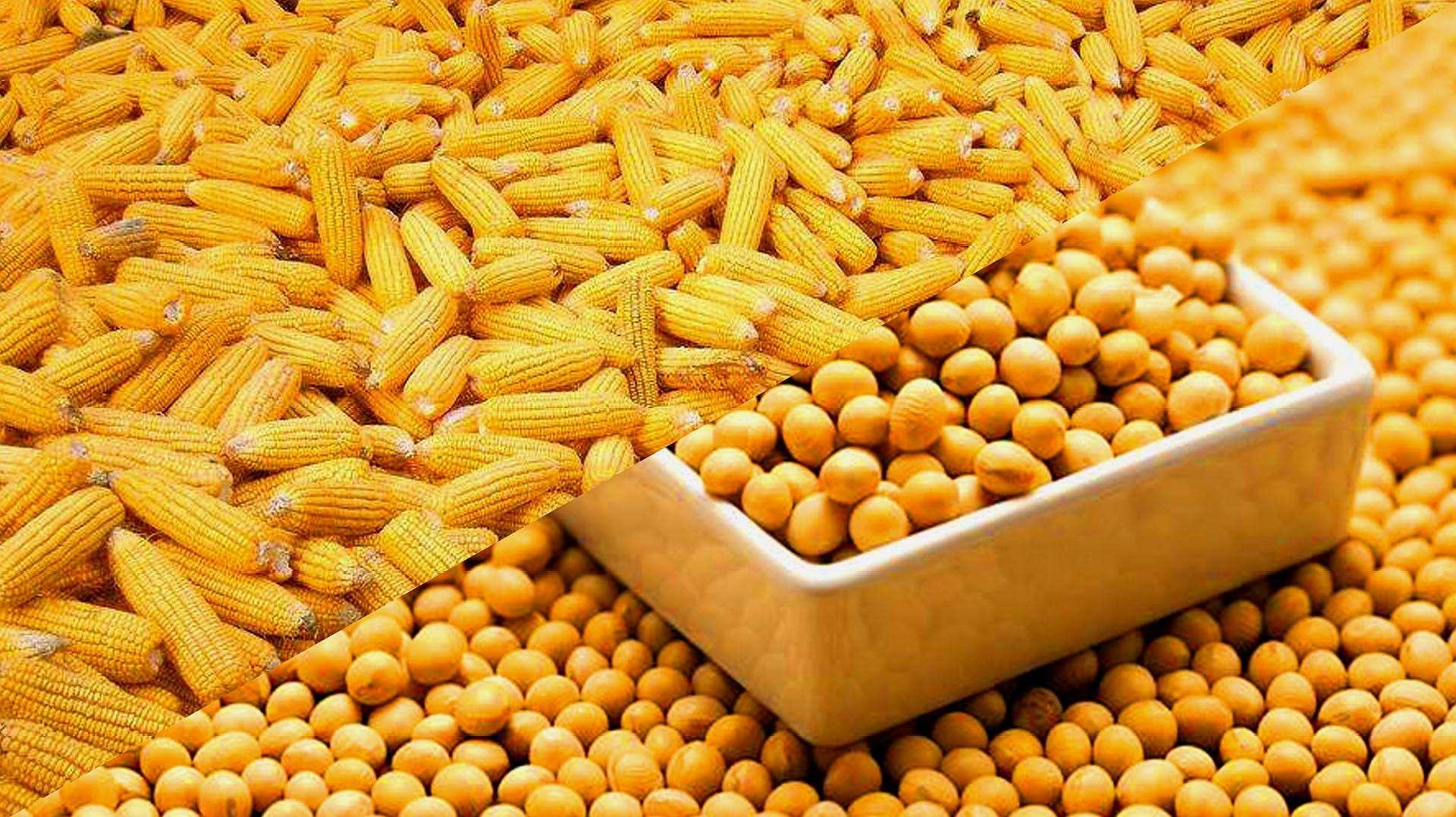 10月21日玉米、豆粕报价,玉米继续上涨