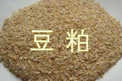 今年以来,豆粕上涨600-700元/吨