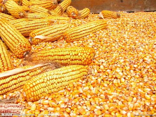 3月2日全国各地玉米、豆粕价格