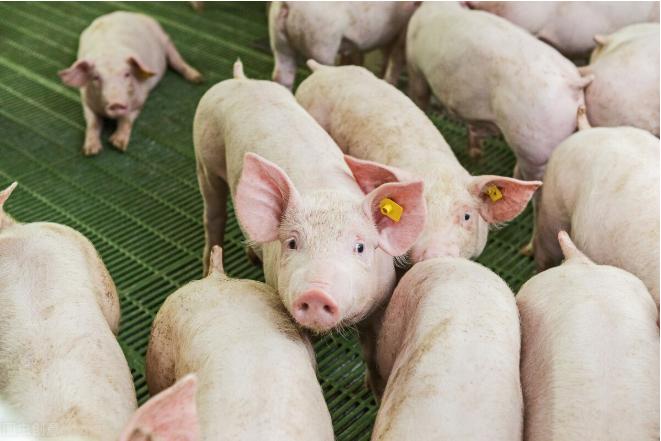 多家猪企3月销售均价降,猪价拐点或在5月