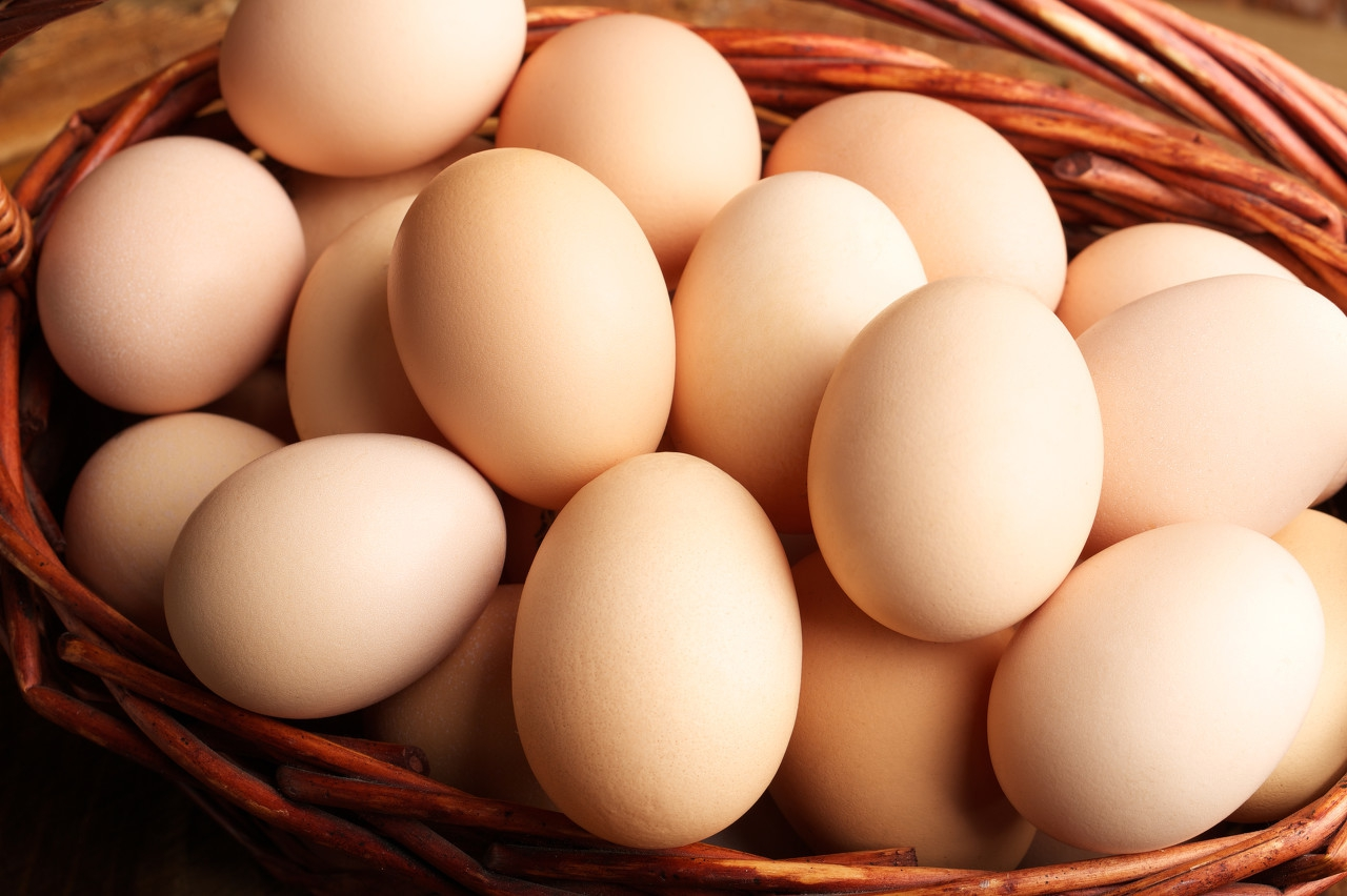 6月11日鸡蛋价格