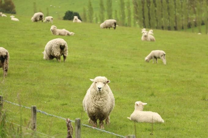 畜牧堂图片
